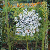 """Queen Anne's lace 8x8"""""""