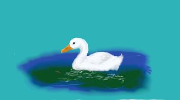 little white duck